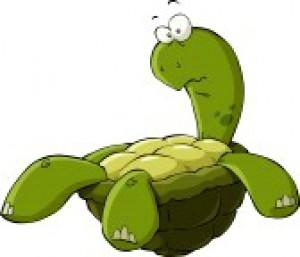 13233966-cartoon-turtle-on-the-back-vector-illustration.jpg